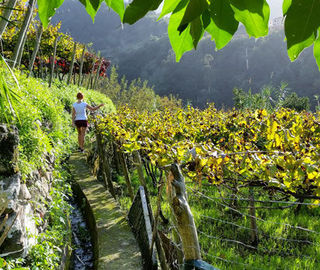 a girl walking in Madeira Vineyards