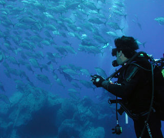 Scuba diving and seeing fishes