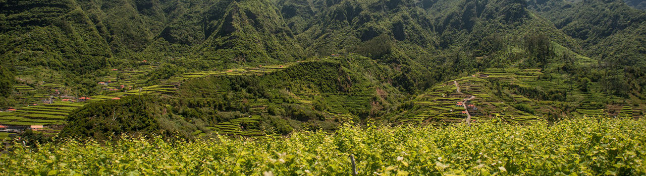 Madeira Vineyards and the mountains