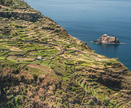 Madeira Vineyards improbable terraces