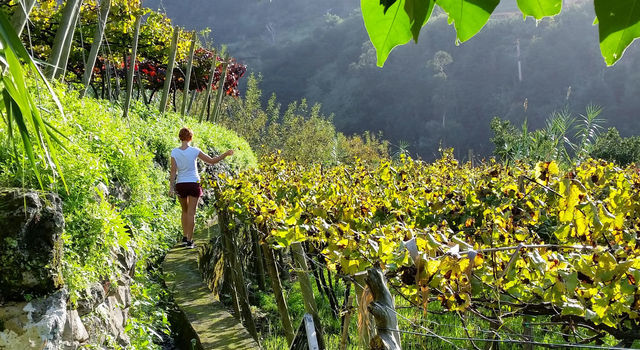 Girl in Madeira Vineyards