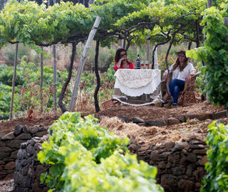 Picnic in the vineyards in Madeira