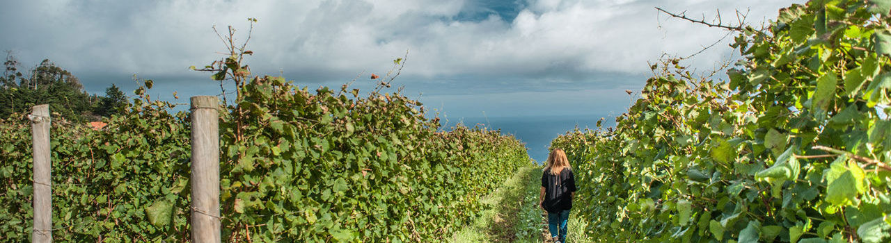 Porto Moniz Vineyards, Madeira Island
